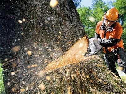 Sázení stromků v lese cena